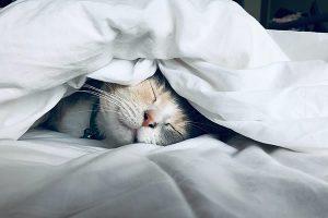 uyku bozukluğu hipertansiyon