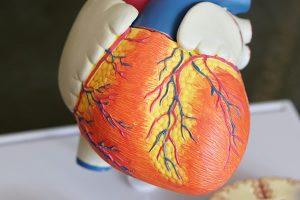 kalp hastalık riski